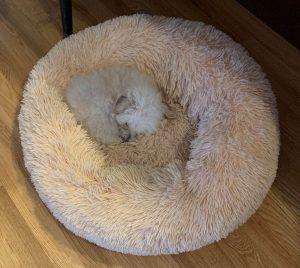 Fraiser taking a nap at Ann's Pet Service
