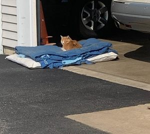 A cat enjoying the sunshine on a comfortable bed at Ann's Pet Service