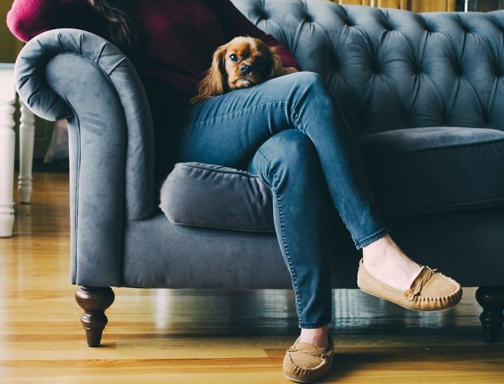 A small dog laying on a lady's lap on a blue couch