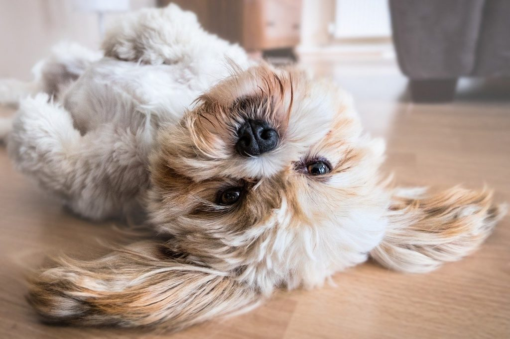A small dog laying on its back