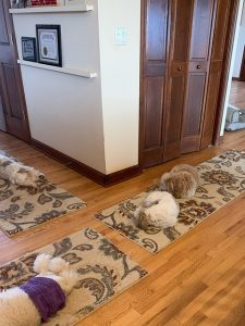 Dogs resting on rugs at Ann's Pet Service