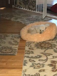 Fraiser resting at Ann's Pet Service