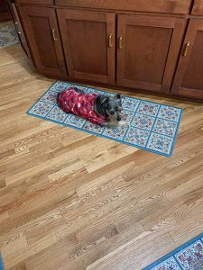 Dog laying down on kitchen mat at Ann's Pet Service